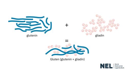 Gluten illustrasjon-NEL Cropped.png